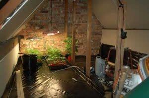 grow tent vs grow room